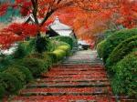autumn_d2ofFzMkZ601