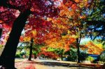bright-autumn_street