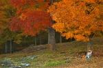 Vermont Autumn Cliche