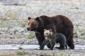 01-399-bear-cub