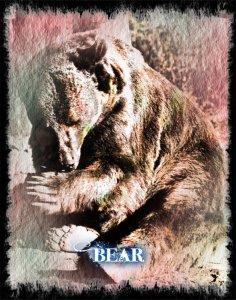 Bear Lenormand