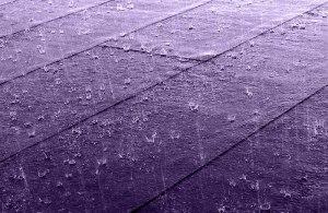800px-Purple_rain_on_roof