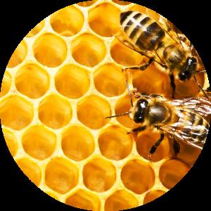 honeycomb_eo_circle_image